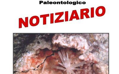 NOTIZIARIO N. 12