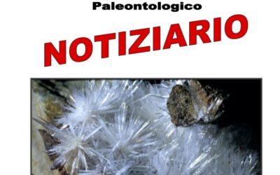 NOTIZIARIO N. 13