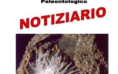NOTIZIARIO N. 7